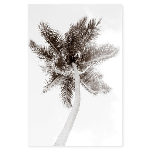 Palm Tree No 1 - Large black and white fine art print by Cattie Coyle Photography ci