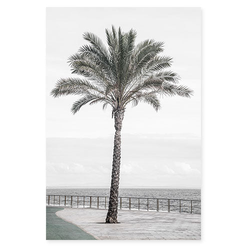 Palm Tree No 3 - Fine Art Photography by Cattie Coyle