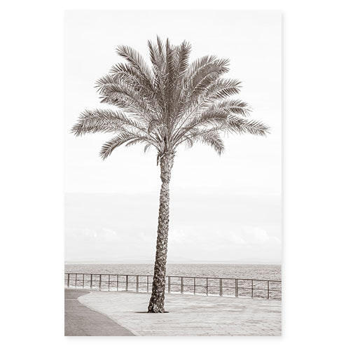 Palm Tree No 3 bw - Black and white fine art print by Cattie Coyle Photography
