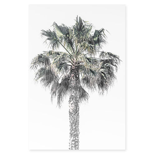Palm Tree No 4 - Fine art print by Cattie Coyle Photography