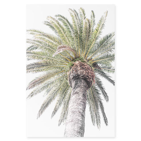 Palm Tree No 5 - Fine art print by Cattie Coyle Photography
