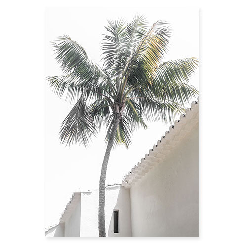 Palm Tree No 6 - Fine art print by Cattie Coyle Photography