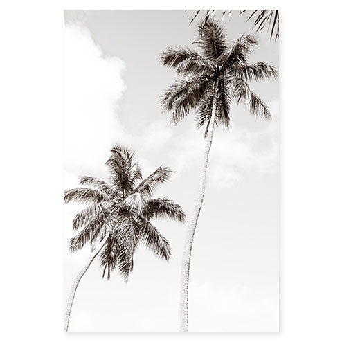 Palm Trees No 1 - Large black and white fine art print by Cattie Coyle Photography