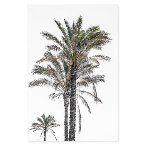 Palm Trees No 3 - Fine art print by Cattie Coyle Photography