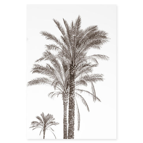 Palm Trees No 3 bw - Black and white fine art print by Cattie Coyle Photography