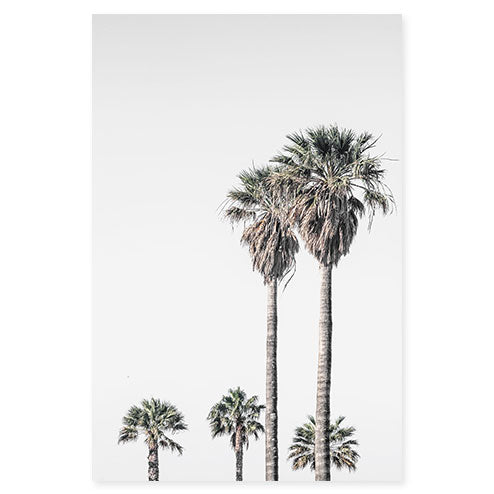 Palm Trees No 4 - Fine art print by Cattie Coyle Photography