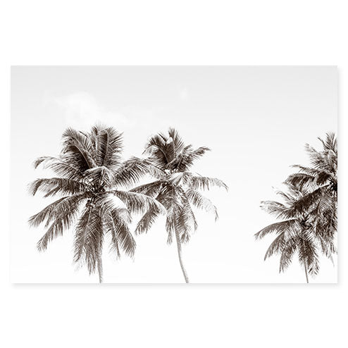 Palm Trees No. 2 - Oversized Black and White Fine Art Photography Print by Cattie Coyle Photography