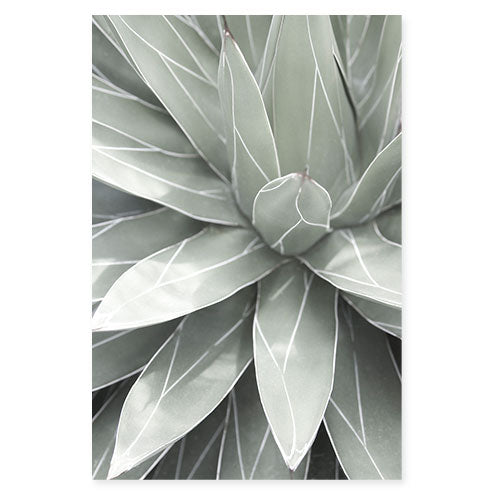 Queen Victoria Agave - Succulent art print by Cattie Coyle Photography