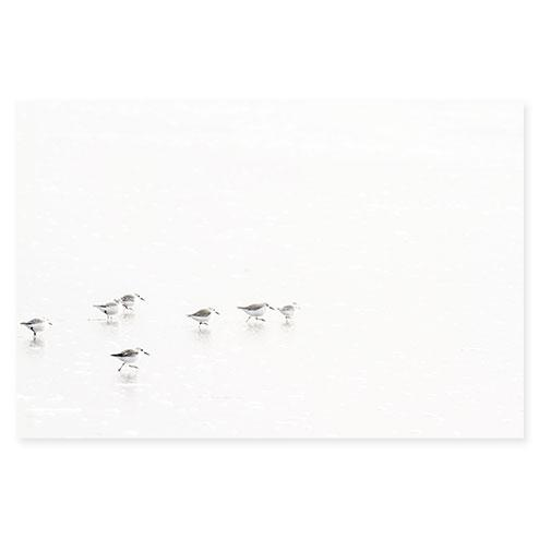 Sandpipers No 5 - Fine art print by Cattie Coyle Photography