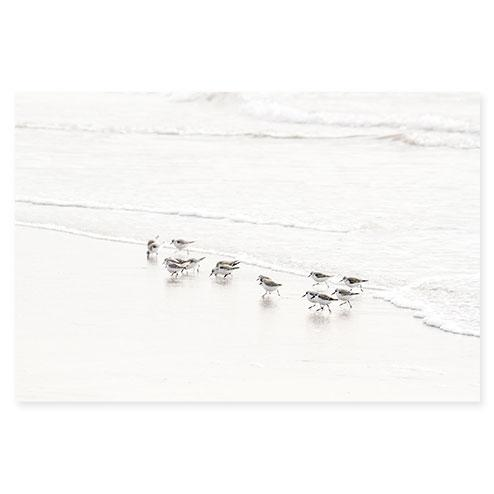 Sandpipers No 6 - Fine art print by Cattie Coyle Photography