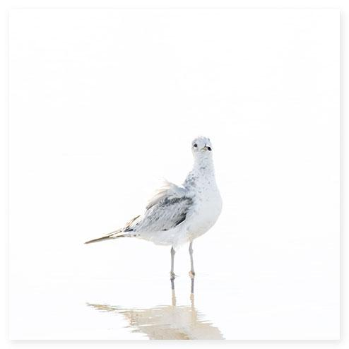 Seagull No 10 - Minimalist bird art print by Cattie Coyle Photography