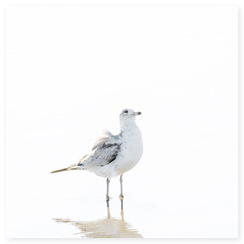 Seagull No 11 - Bird fine art print by Cattie Coyle Photography