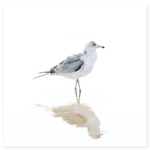 Seagull No 12 - Minimalist fine art print by Cattie Coyle Photography