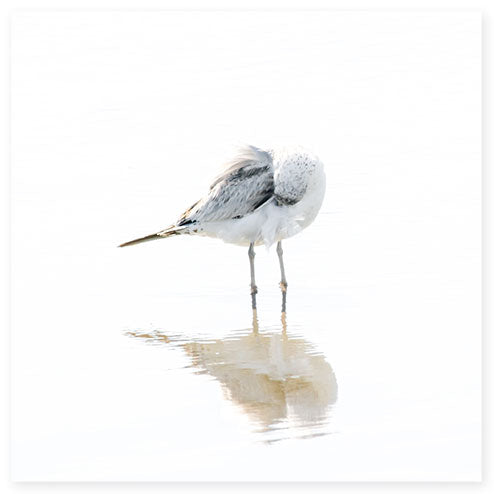 Seagull No 13 - Minimalist bird fine art print by Cattie Coyle Photography