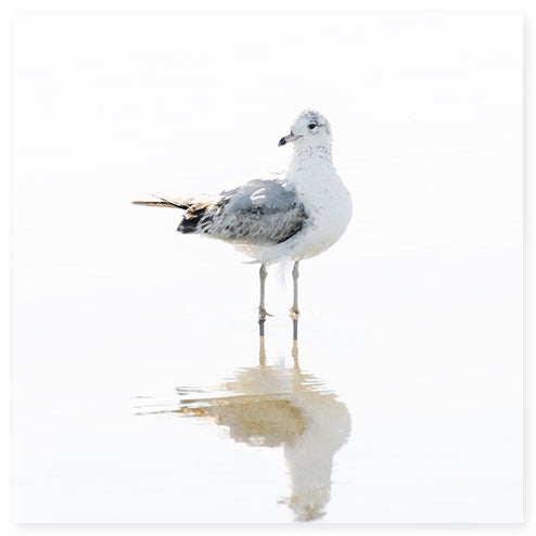 Seagull No 14 - Minimalist fine art print by Cattie Coyle Photography