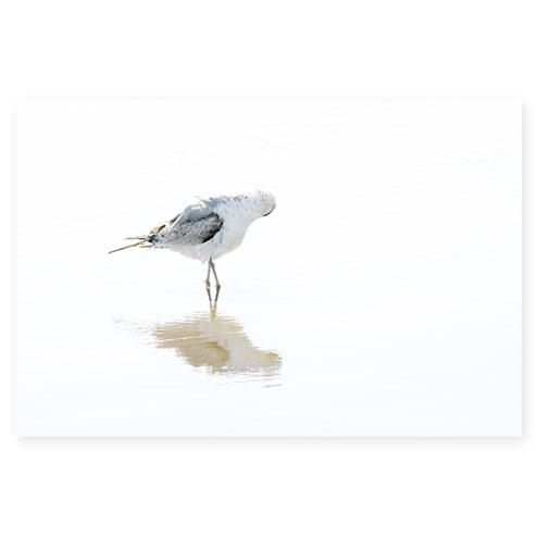 Seagull No 15 - Minimalist fine art print by Cattie Coyle Photography