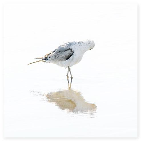 Seagull No 15 - Minimalist bird art print by Cattie Coyle Photography