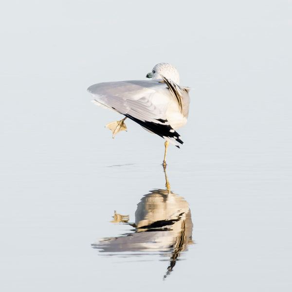 Seagull No 6 - Seagull wall decor by Cattie Coyle Photography
