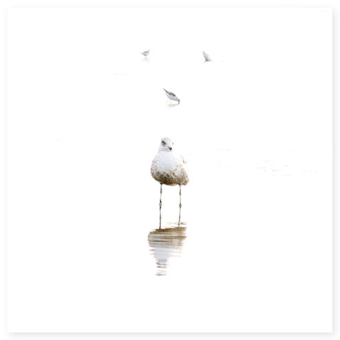 Seagull and Sandpipers - Fine art print by Cattie Coyle Photography