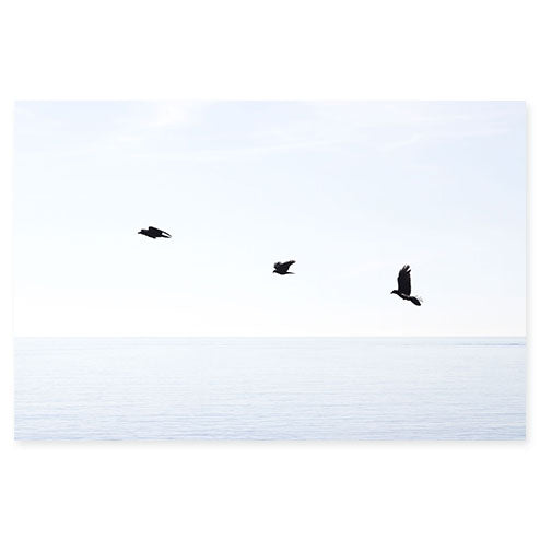 Three birds in flight - Minimalist blue art print by Cattie Coyle Photography