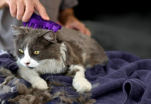 CAT GROOMING & BATHING