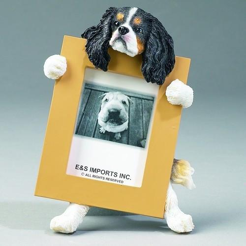 King Charles Cavalier TriColor - Small Frame - The Happy Dolphin Pets