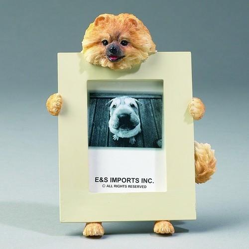 Pomeranian Small Frame - FREE with orders over AED300 - The Happy Dolphin Pets