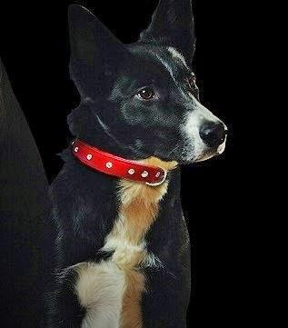 Genuine Leather Athens Red Single Row with Rhinestones Collar - The Happy Dolphin Pets