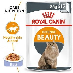 Royal Canin Jelly Intense Beauty For Adult Cats - Dubai - UAE