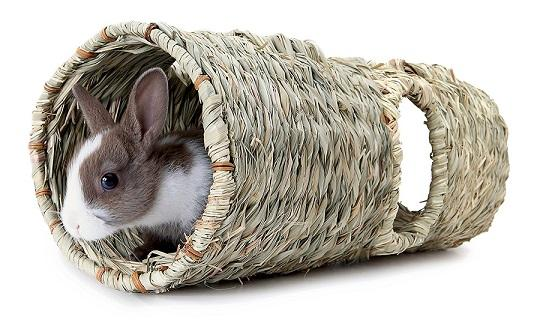 Living World Green Reed Tunnel For Small Pets - The Happy Dolphin Pets