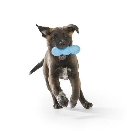 Buy Westpaw Rumpus Chew Toy  Durable & Strong For Tough Chew - Dubai