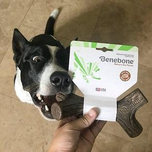 Benebone Maplestick Medium - For Dogs Under 60lb - The Happy Dolphin Pets