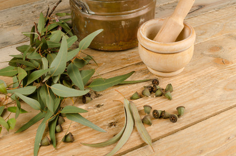 Eucalyptus plant leaves and oil