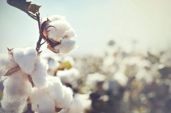 The effect of fast fashion - cotton