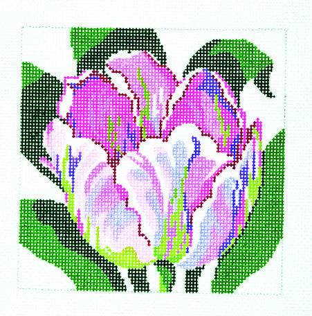 Purple & White Tulip