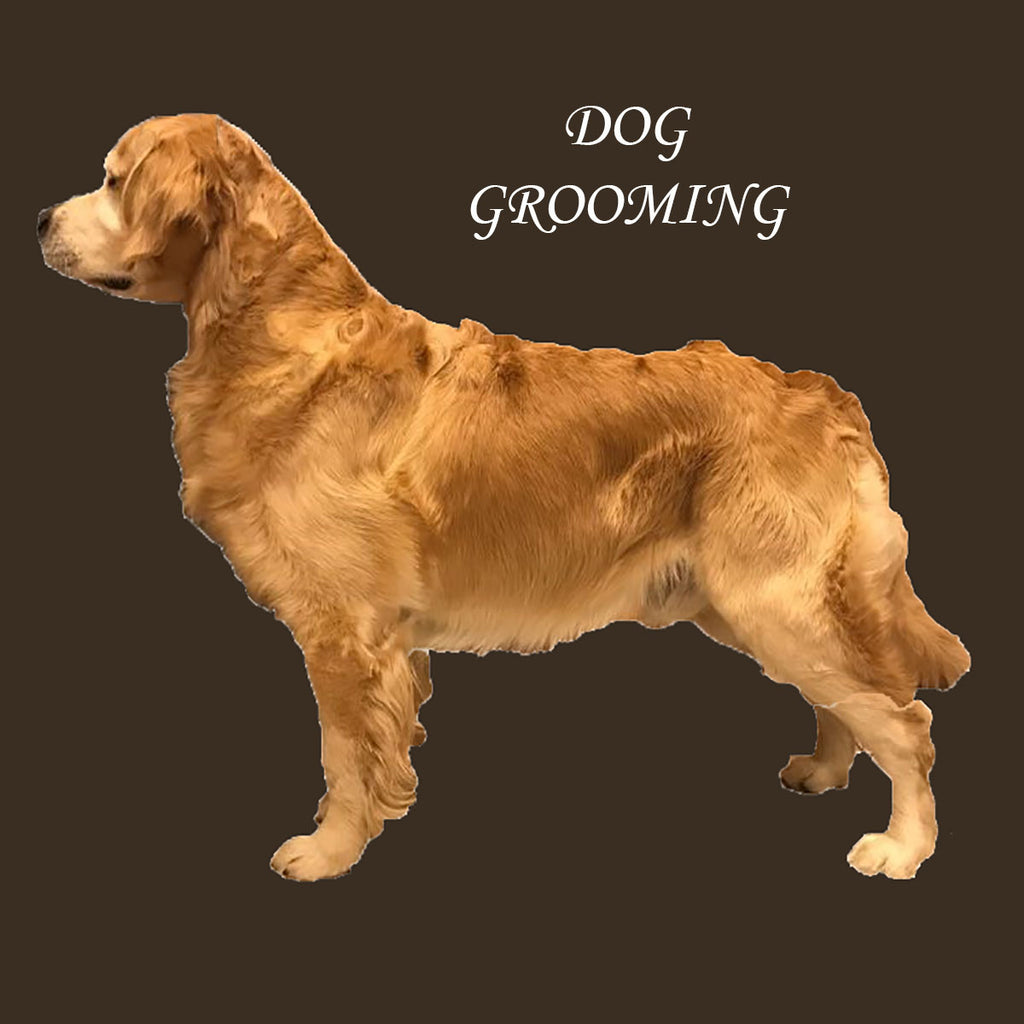 Register for Dog Grooming