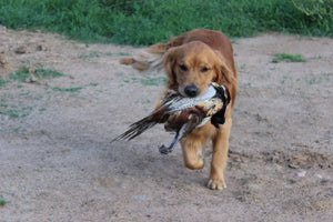 Intermediate Gun Dog Drills Class (Tu-Fri)