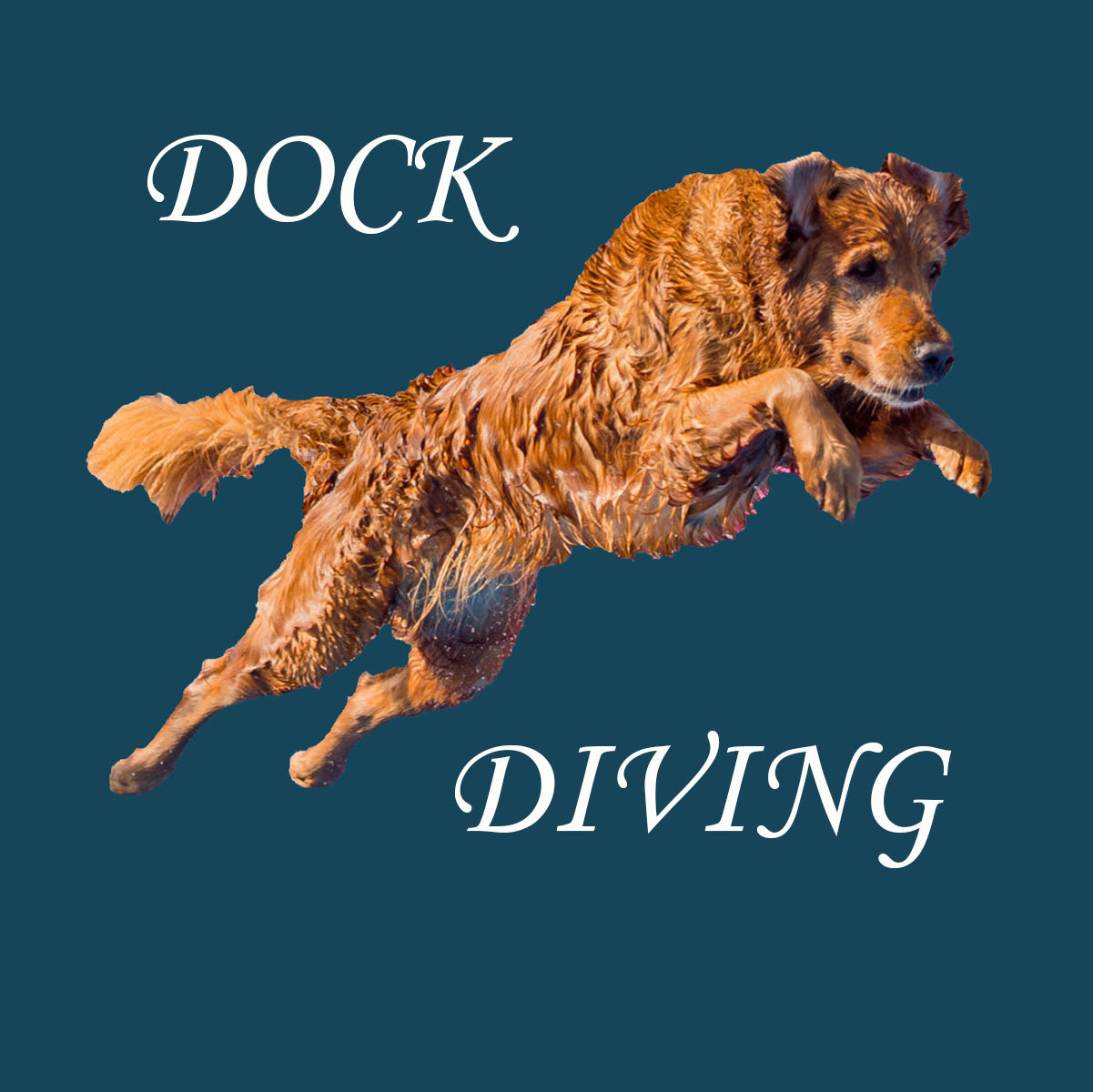 Dock Diving Practice for Experienced Teams