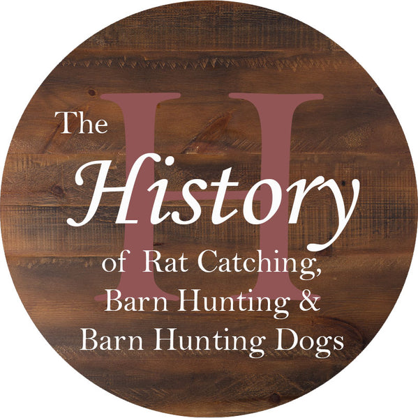 A History of Rat Catching, Barn Hunting & Barn Hunting Dogs!