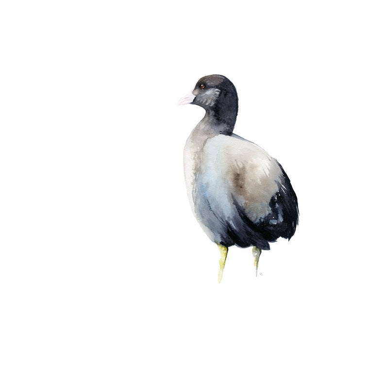 Coot Watercolour Giclee Print