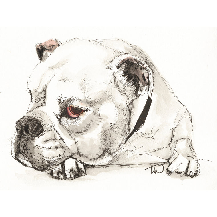 Winston- Bulldog Ink & Watercolour Limited Edition Giclee Print