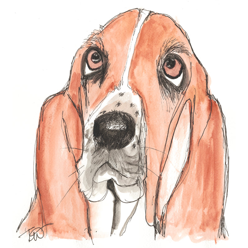 Mr Bassett- Hound Ink & Watercolour Limited Edition Giclee Print