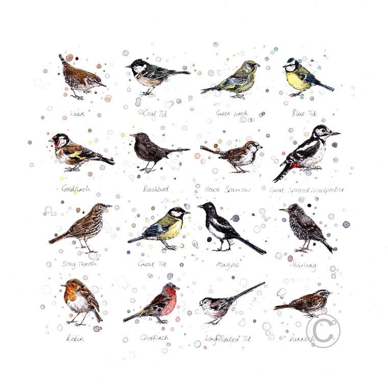 Garden Birds Ink and Watercolour Signed Limited Edition Print