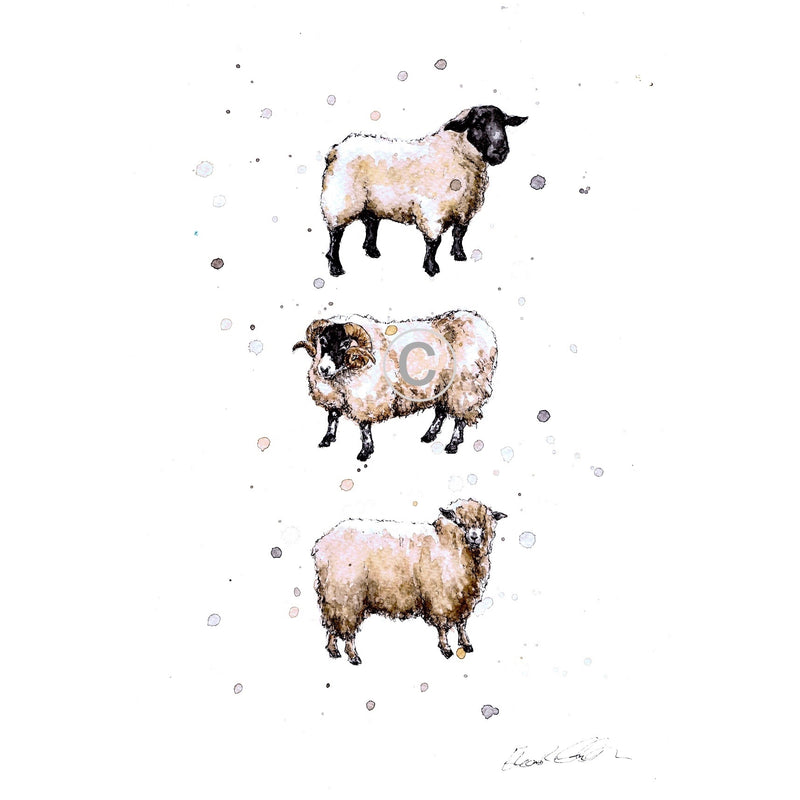 Native Sheep Breeds Ink and Watercolour Signed Limited Edition Print