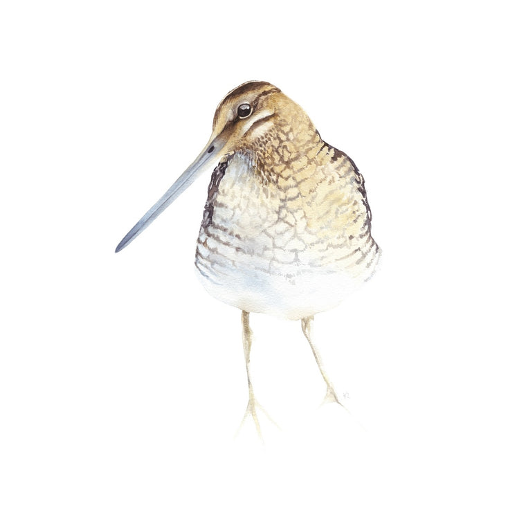 Snipe Watercolour Giclee Print