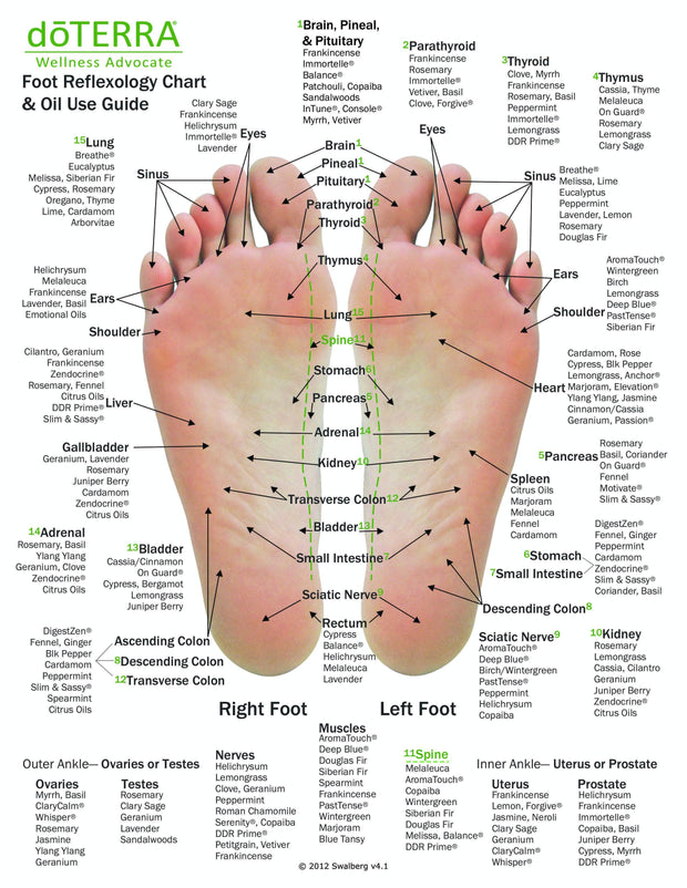 Hand & Foot Reflexology Cardstock 8.5x11 - Oil Life