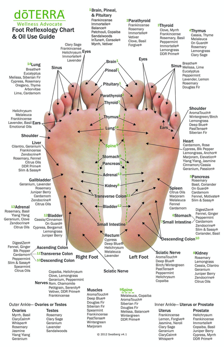 Hand & Foot Reflexology on Cardstock: 8.5x5.5 Sheet