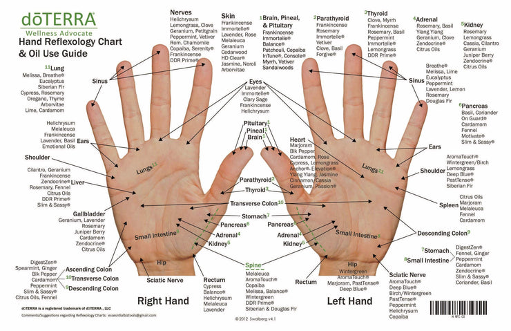 Hand & Foot Reflexology on Cardstock: 8.5x5.5 Sheet - Oil Life