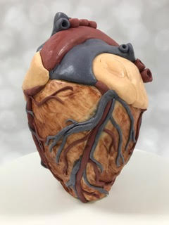 Beth Meyer anatomical heart