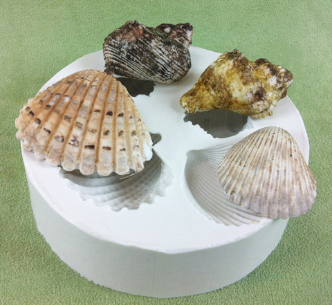 Med size Sea Shells - 4